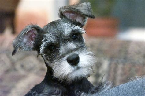Hypoallergenic pets: Dog and cat breeds for allergy